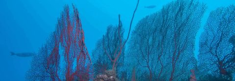Experience Scuba Diving In India