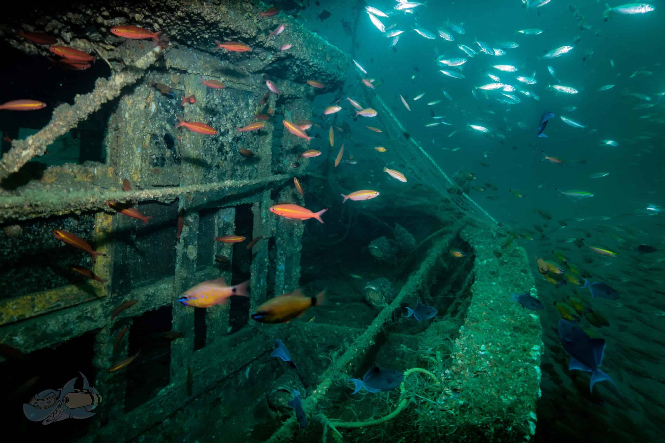 Marine life at at the wreck site