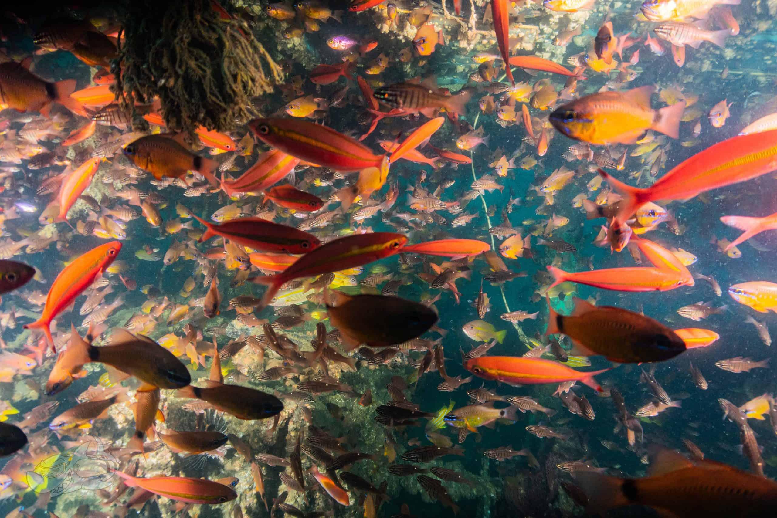 Rich marine life found in pondicherry