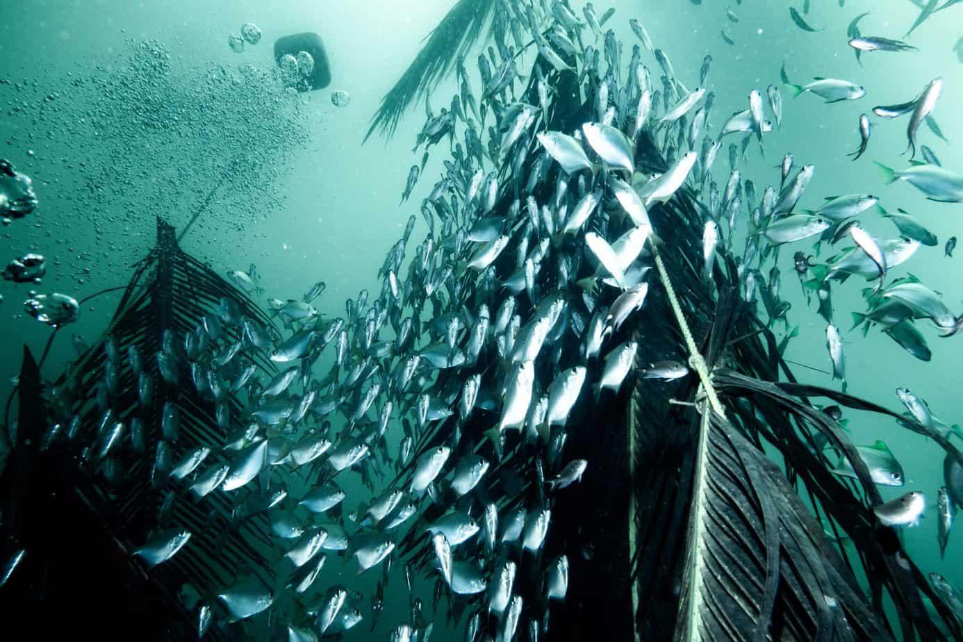 marine life of Pondicherry
