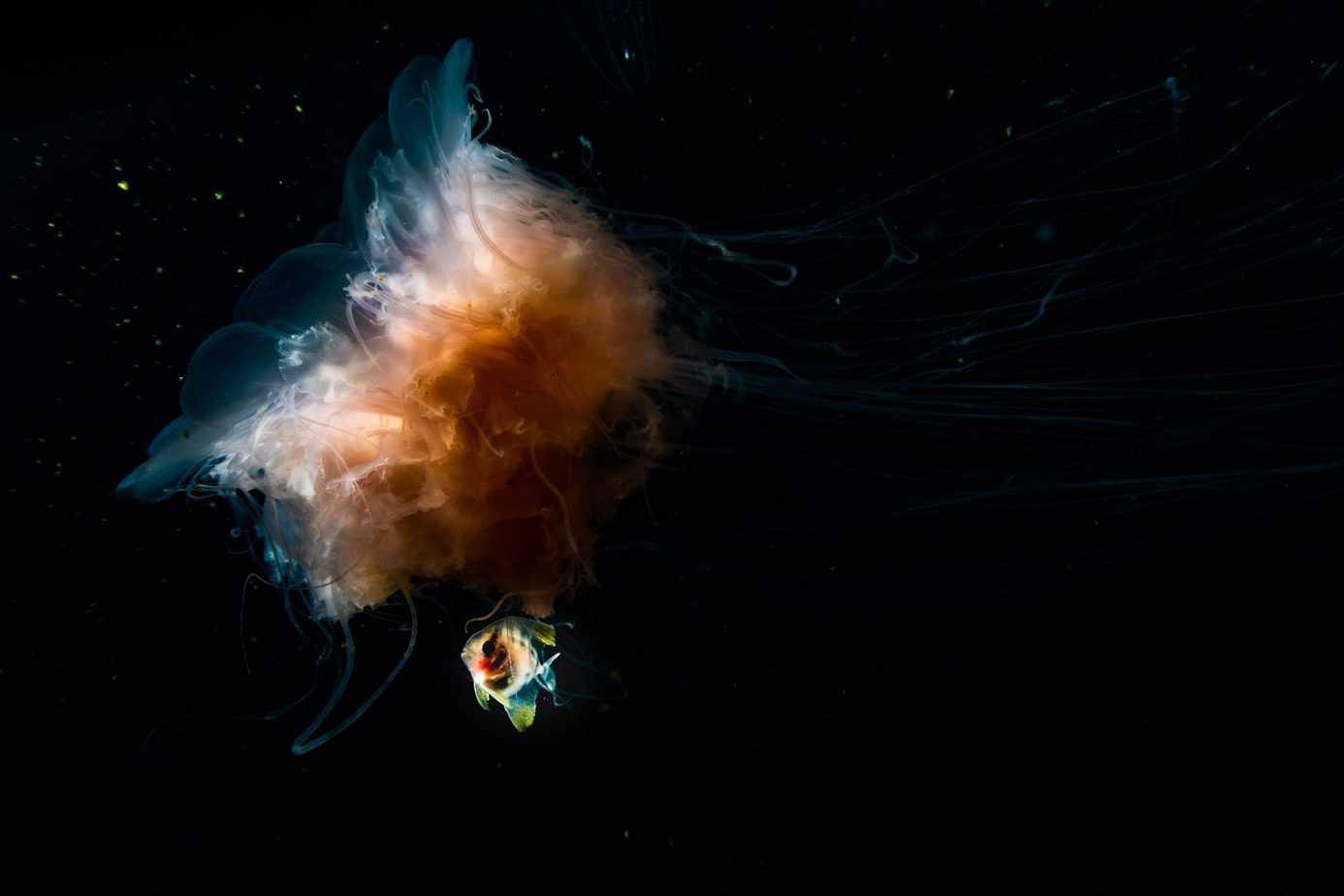 facts about jellyfish